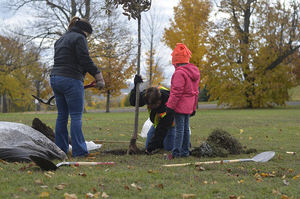 The OEC's community tree plantings can be a vital part of furthering environmental sustainability in Syracuse's urban forest.